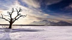 020-jozef-macutek-strom-spisska-bela.jpg